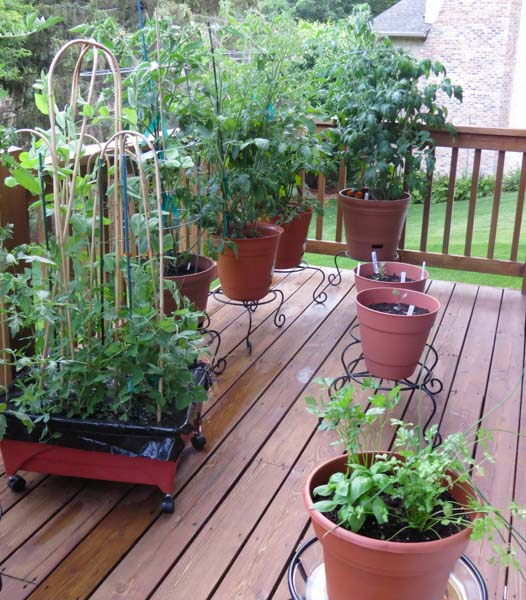 Monika Has One Of The Best Patio/porch Gardens Weu0027ve Ever Seen, And She  Does An Amazing Job Of Making Her Garden Look Great While Producing A Ton  Of Healthy ...