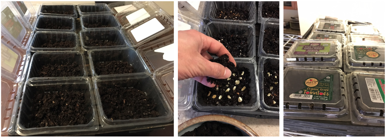 Steps 1-6 below. We used old clamshell containers from the grocery store to grow this round of microgreens. Each container held a different seed variety that we labeled on the lid.