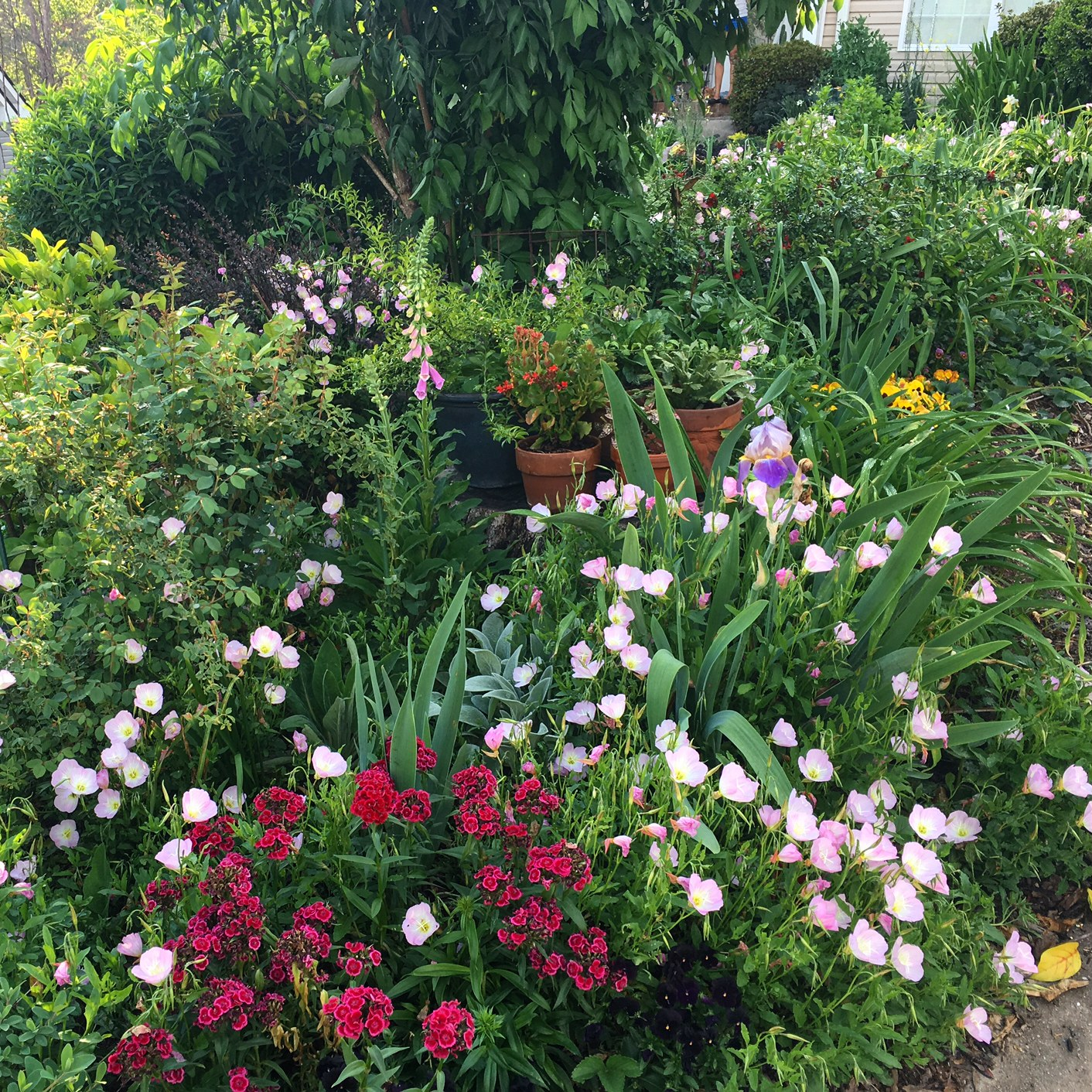 gorgeous edible landscaping made easy part 1 of 3 design theory