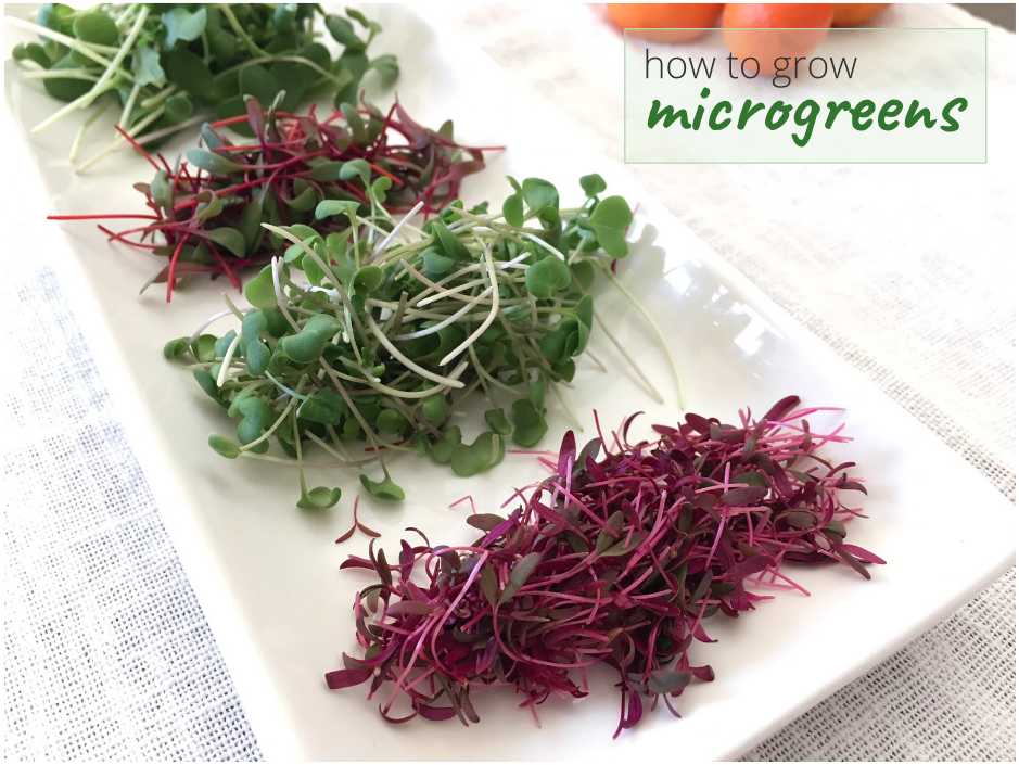 How to grow microgreens by GrowJourney
