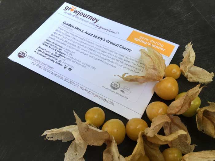 Good things sometimes come in small packages! Ground cherries were the fruit that originally made us fall in love with heirloom seeds.