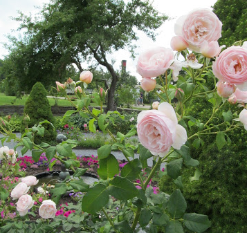 There are some fantastic edible rose varieties out there. You can read more about them here.
