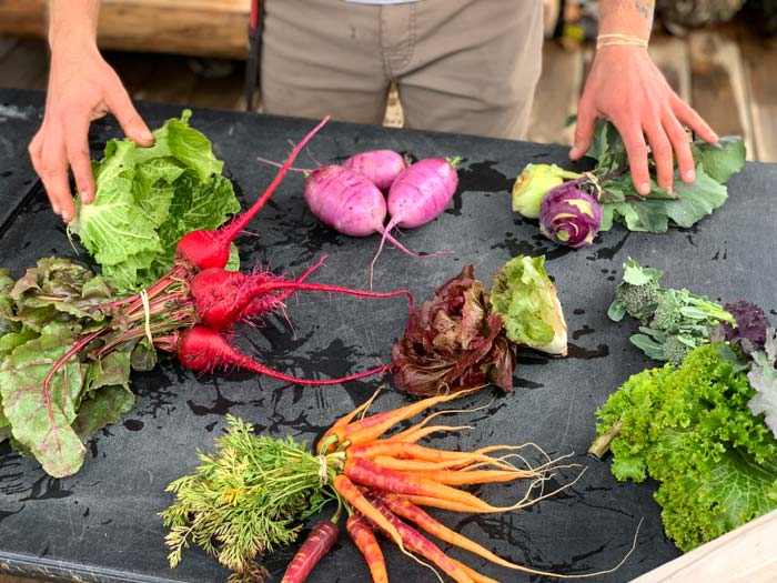 A nice diversity of annual root crops and greens, straight from the field on a cool January day at Horseshoe Farm.