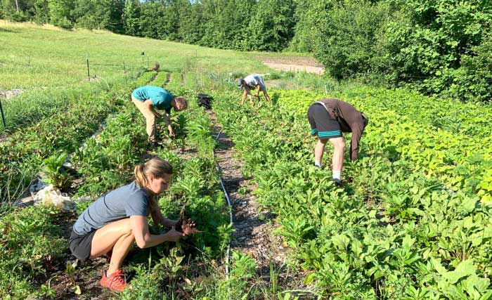 Interns and crew working at Horseshoe Farm in spring.