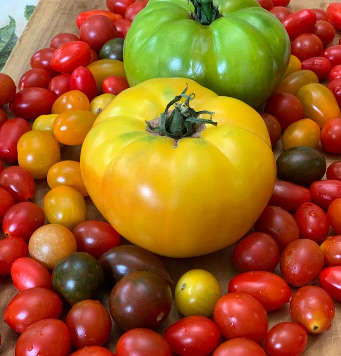 Got too many tomatoes? There are only so many tomatoes that you and your backyard poultry can eat in a day. We'll share some of our favorite tomato recipes to help you use up lots of tomatoes.