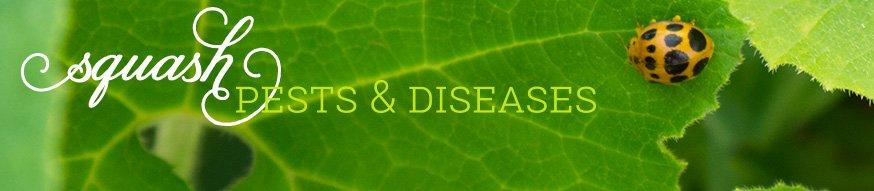 黄瓜 - 害虫疾病