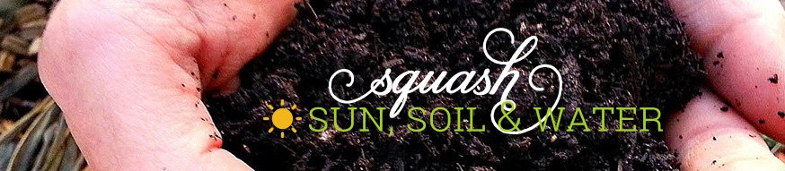 Planting squash - sun, soil, and water needs
