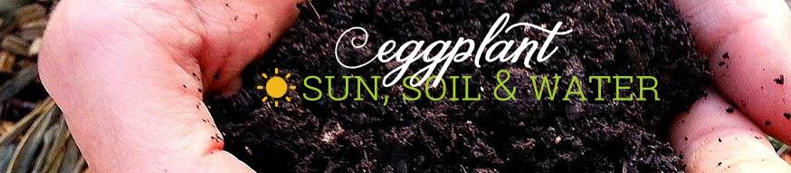 eggplant-sun-soil-water