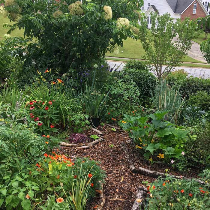 A yellow zucchini squash plant graces the tip of the center bed in this highly diverse edible organic home landscape.