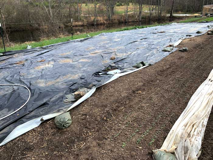 A weed-killing silage tarp over a section of field at Horseshoe Farm.