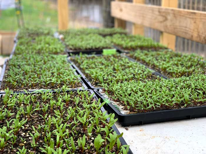 Seedlings growing in Chris's propagation house.